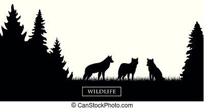 vie sauvage, silhouette, pré, wolfs, forêt noire, blanc, meute