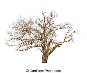 vieil arbre, isolé, mort, fond, blanc