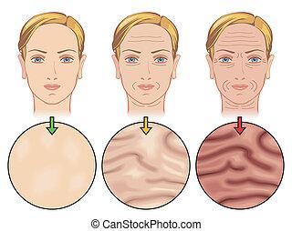 vieillissement, peau