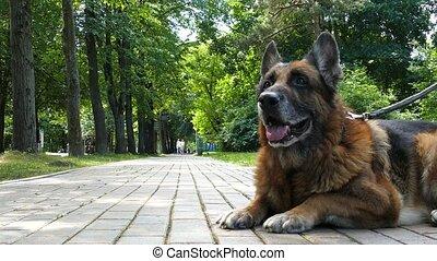vieux chien, dehors