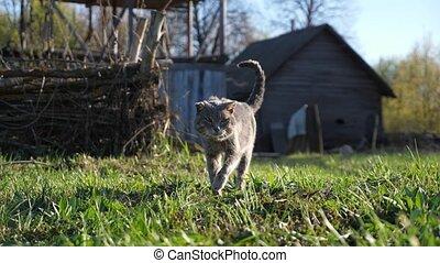 vieux, contre, promenades, bois, gris, herbe, chat, expérimenté, fond, maison