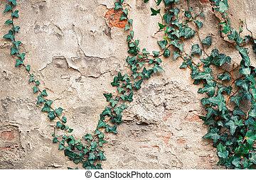 vieux, mur, feuilles, vert, château, lierre