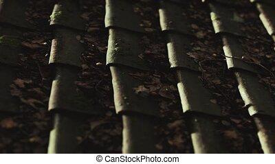 vieux, toit tuile, mousse