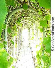 vigne, tunnel