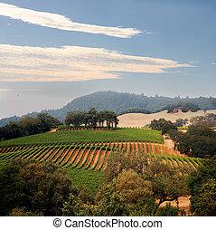 vignoble, californie