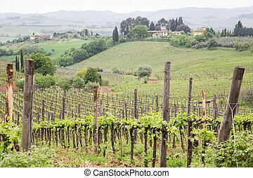 vignoble, maisons, sur, toscane