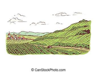 vignobles, paysage, illustration, vecteur, rural, planté, champs