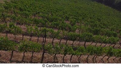 vignobles, vue aérienne