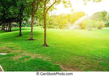 ville, grand, parc, champ, herbe verte