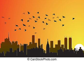 ville, voler, oiseaux, fond