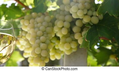 vin blanc, raisin, lunettes