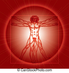vitruvian, vitruviano)., version., (homo, rouges, homme