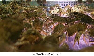 vivant, homards, vente