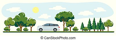 voiture, arbres, passé, long, promenades, route