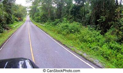 voiture, forêt, conduite