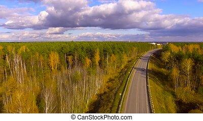 voiture, forêt, suivre