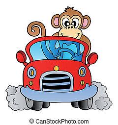 voiture, singe