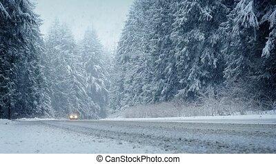 voitures, tempête neige, par, conduire, forêt