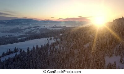 vol, paysage, forêt, naturel, vue, aérien, hiver, coming., couvert, pin, sous, sunrise., montagnes, carpathian, sur, jour, snow., height., impeccable, nouveau
