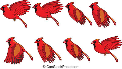 voler, animation, cardinal, oiseau