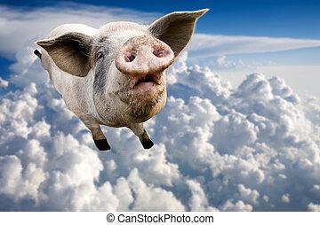 voler, cochon