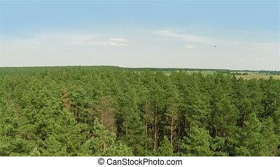 voler, forêt, pin, sur
