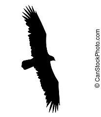 voler, illustration, vecteur, fond, blanc, oiseaux