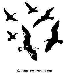 voler, silhouettes, vecteur, fond, blanc, oiseaux