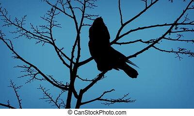 voler, soir, fermé, oiseaux, branche