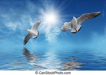 voler, soleil blanc, oiseaux