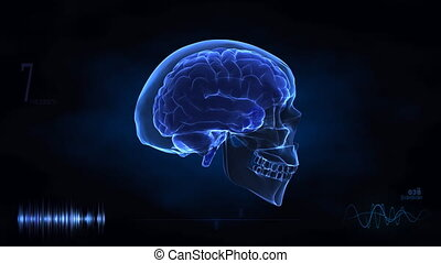 voyage, cerveau humain