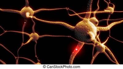 vrai, synapse, réseau, neurone, capable, rouges, impulsion, activité, boucle, électrique