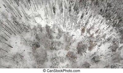 vue, aérien, arbres, neigeux