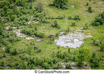 vue, aérien, elephants., troupeau