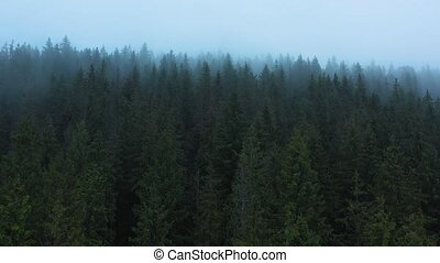 vue, flanc montagne, forêt, hauteur, brouillard, conifère