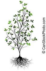 w, sur, arbre, vecteur, gree, racine
