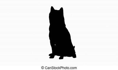 waiting., silhouette, chien, séance, inu, shiba, mignon