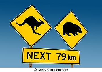 warni, kangourou, wombat