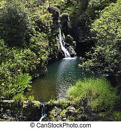 waterfall., luxuriant