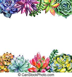 wildflower, isolated., aquarelle, style, cadre, succulentus, fleur