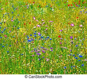 wildflowers, pré, coloré