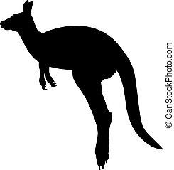 wildlife., animal, silhouette, kangaroo., australien