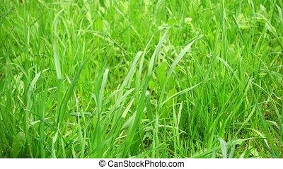 wind., champ, beau, herbe, vert