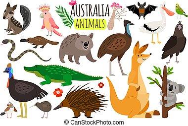 wombat, icônes, kangourou, animals., émeu, australie, vecteur, animal, koala, australien, autruche
