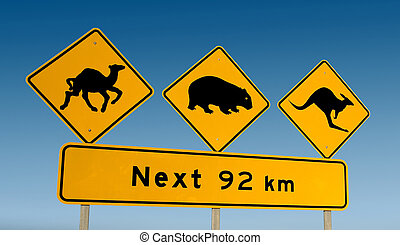 wombat, kangourou, came