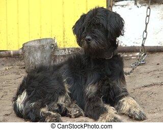 yard, chien