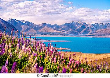 zélande, tekapo, lac, paysage, nouveau, fleurs, montagnes, vue