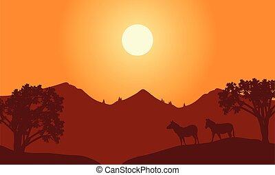 zebra, silhouette, paysage, coucher soleil