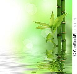 zen, bambou