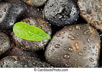 zen, freshplant, pierres, gouttes, eau